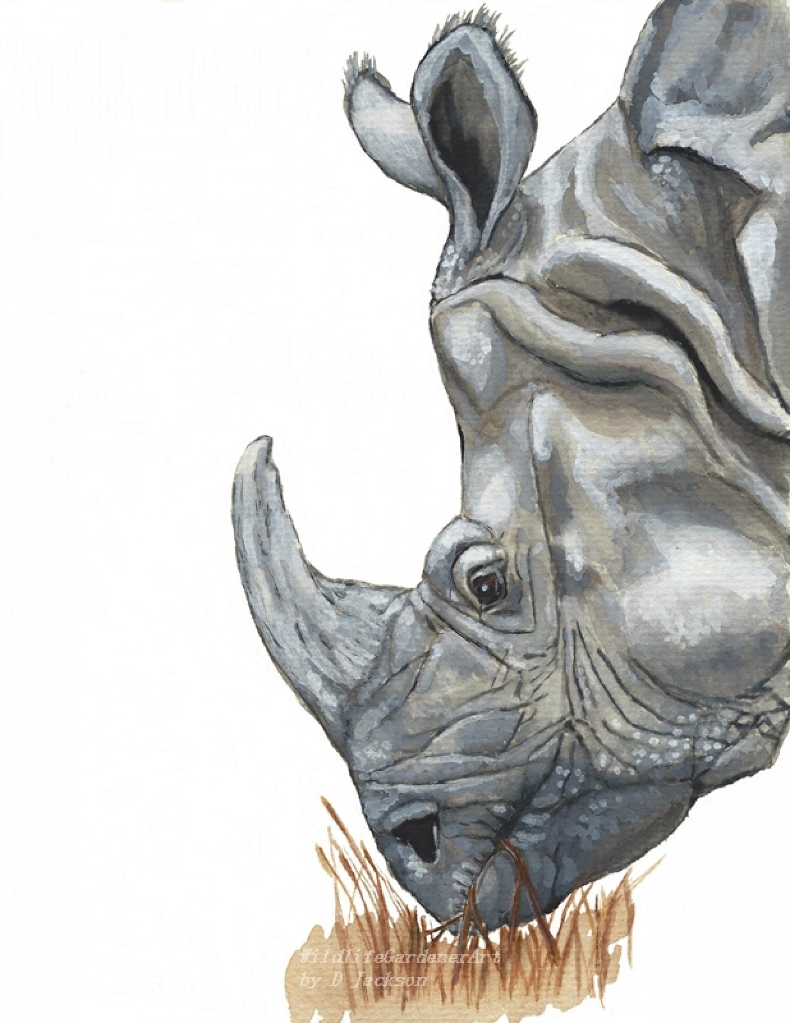 1600x2071 Rhino Watercolor Art Print, Safari Animal Art Wildlife Gardener Art