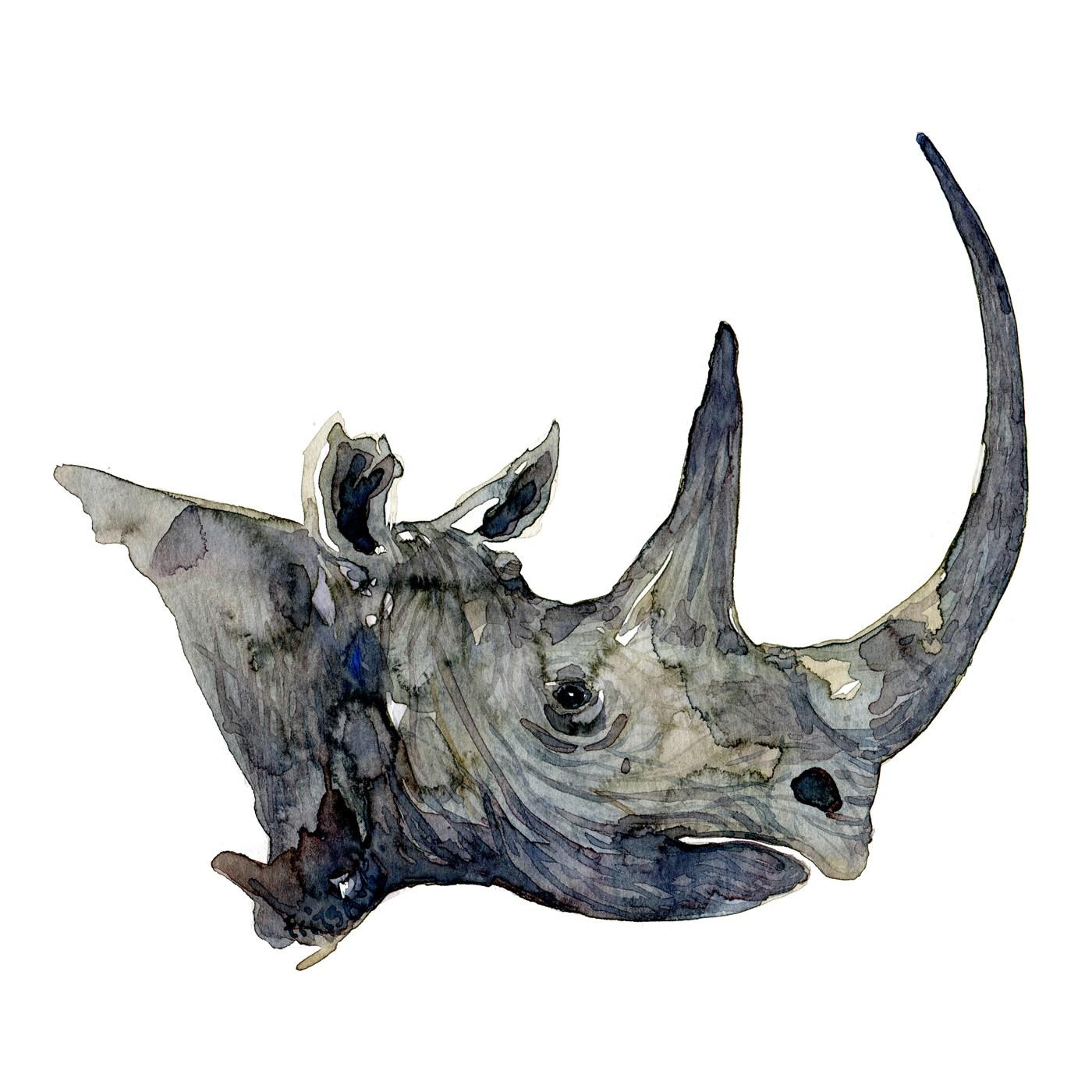1400x1400 Rhino Head Watercolor Frits Ahlefeldt