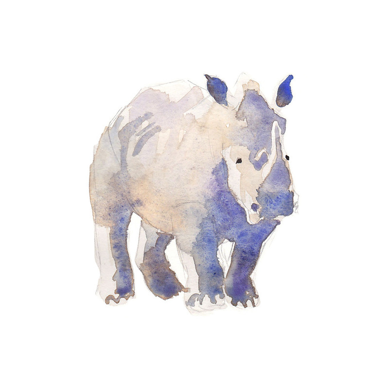 800x800 Watercolor Rhino Wall Art Prints By Haley Mistler Minted