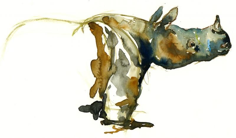 800x467 Watercolor Rhino And Ink Owls +