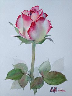 Rose Art Watercolors