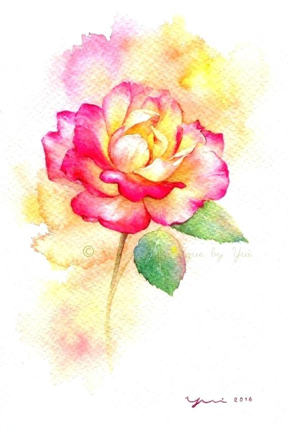 570x844 Rose Water Color Print Rose Watercolor Painting X Artist From