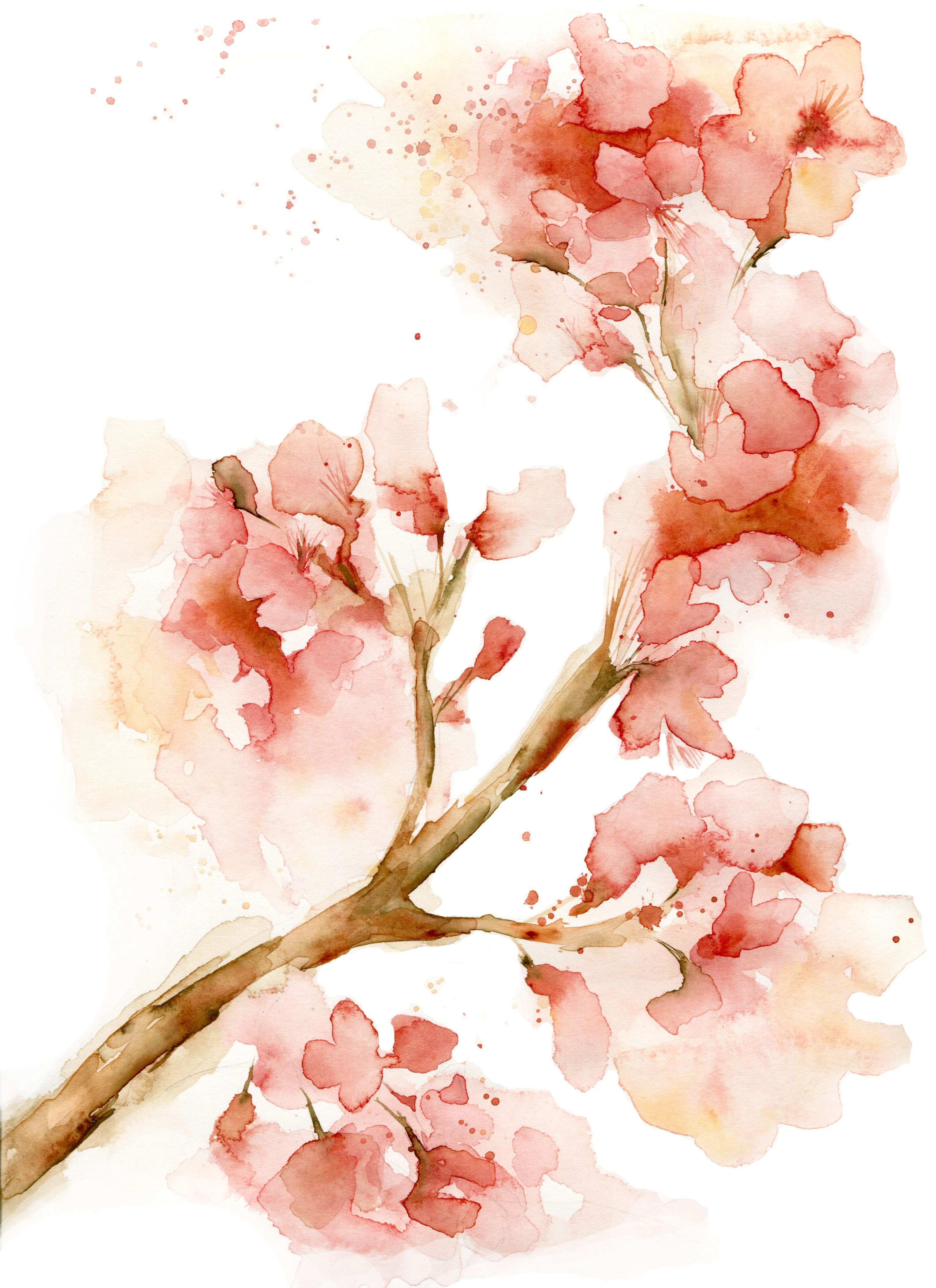 3060x4211 Cherry Blossom Painting Lovely Watercolor Cherry Blossom Flower