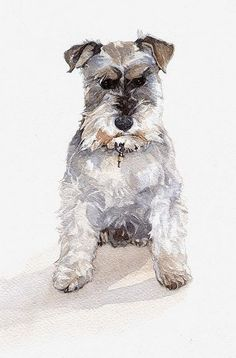 236x358 Image Result For Watercolor Of Miniature Schnauzer Watercolor
