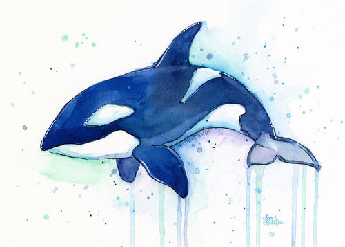 500x357 Killer Whale Orca Watercolor Art Print, Whale Art, Whale Painting