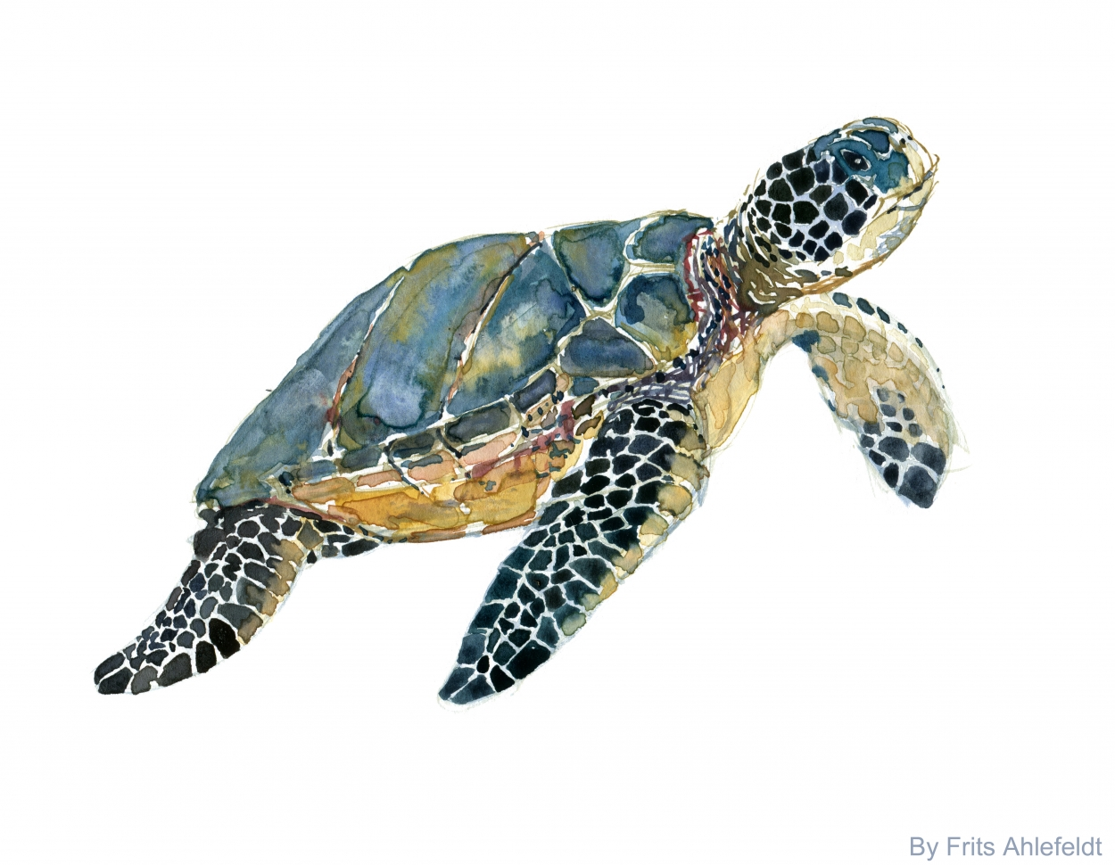 1250x970 Sea Turtles Watercolors The Hiking Artist Project By Frits Ahlefeldt