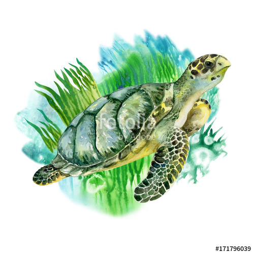 500x500 Sea Green Turtle With Seaweed On White Background. Sea Life