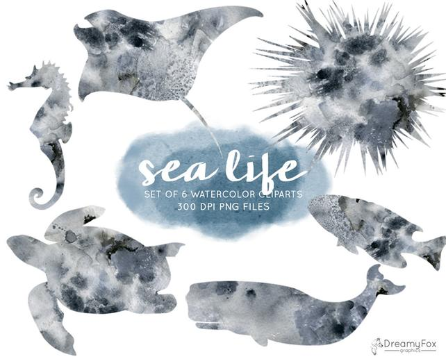 642x517 Sea Life Watercolor Clipart Set Commercial Use Sea Animals Etsy
