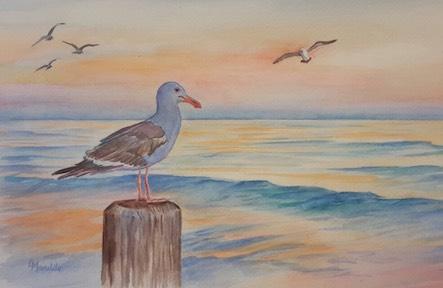 443x288 Watercolor Seagull Main Avenue Galleria Amp School Of Art