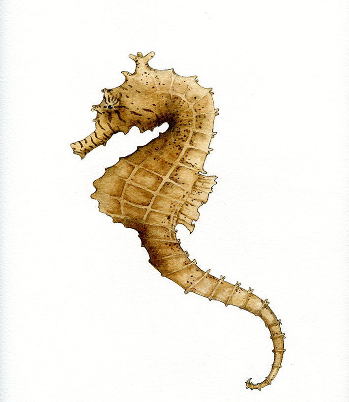 710x817 How To Draw And Paint A Seahorse Step By Step