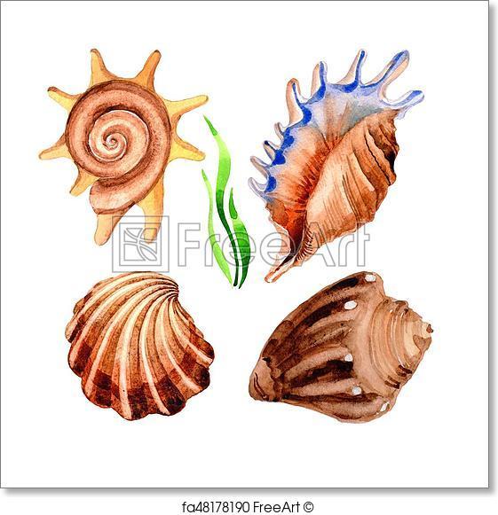 561x581 Free Art Print Of Watercolor Summer Beach Seashell Tropical