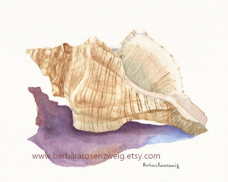 800x639 Gallery Watercolor Seashells Step By Step,