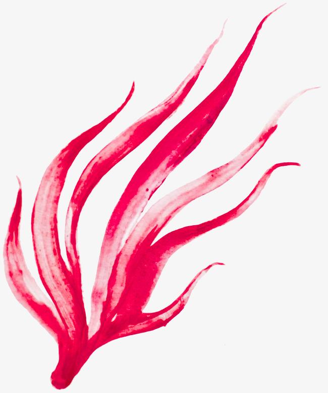 650x780 Pink Watercolor Seaweed, Watercolor Clipart, Seaweed Clipart, Pink