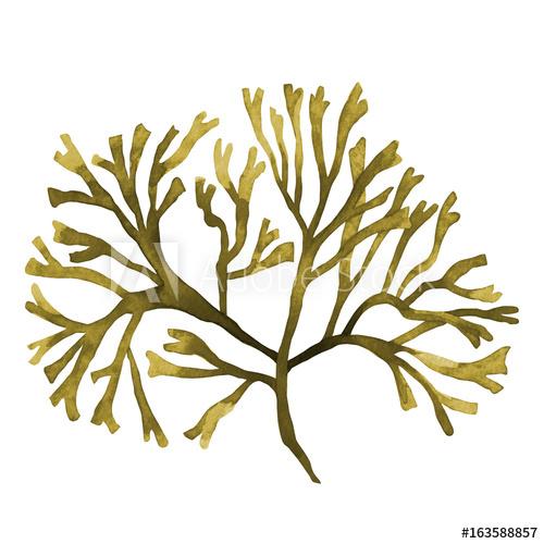 500x500 Brown Seaweed ,kelp, Algae In The Ocean Watercolor Hand Painted