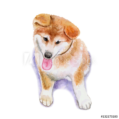 500x500 Watercolor Closeup Portrait Of Red Japanese Shiba Inu Puppy