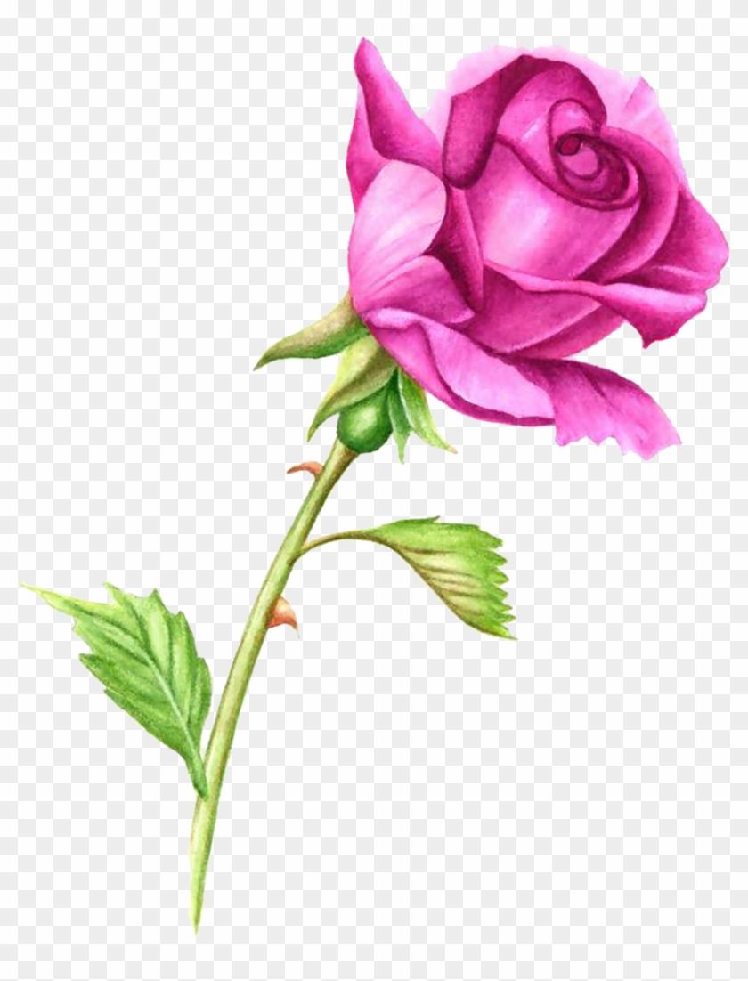 Simple Rose Garden: Simple Flower Watercolor Painting At GetDrawings.com