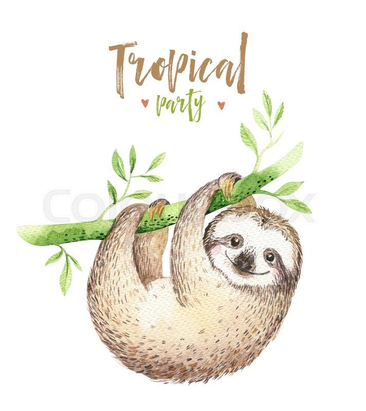 712x800 Baby Animals Sloth Nursery Isolated Painting. Watercolor Boho