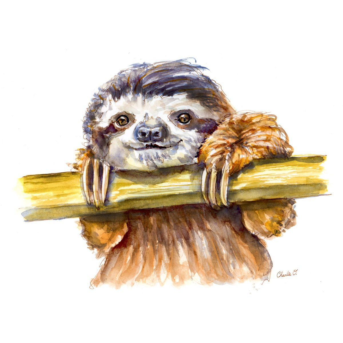 1200x1200 ~ Forest Animals Sloth Watercolor Print