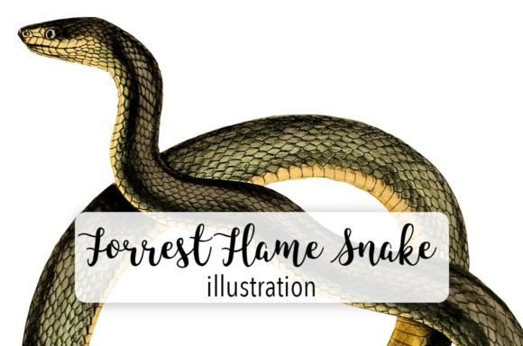 580x384 Forest Flame Snake Watercolor Graphic By Enliven Designs