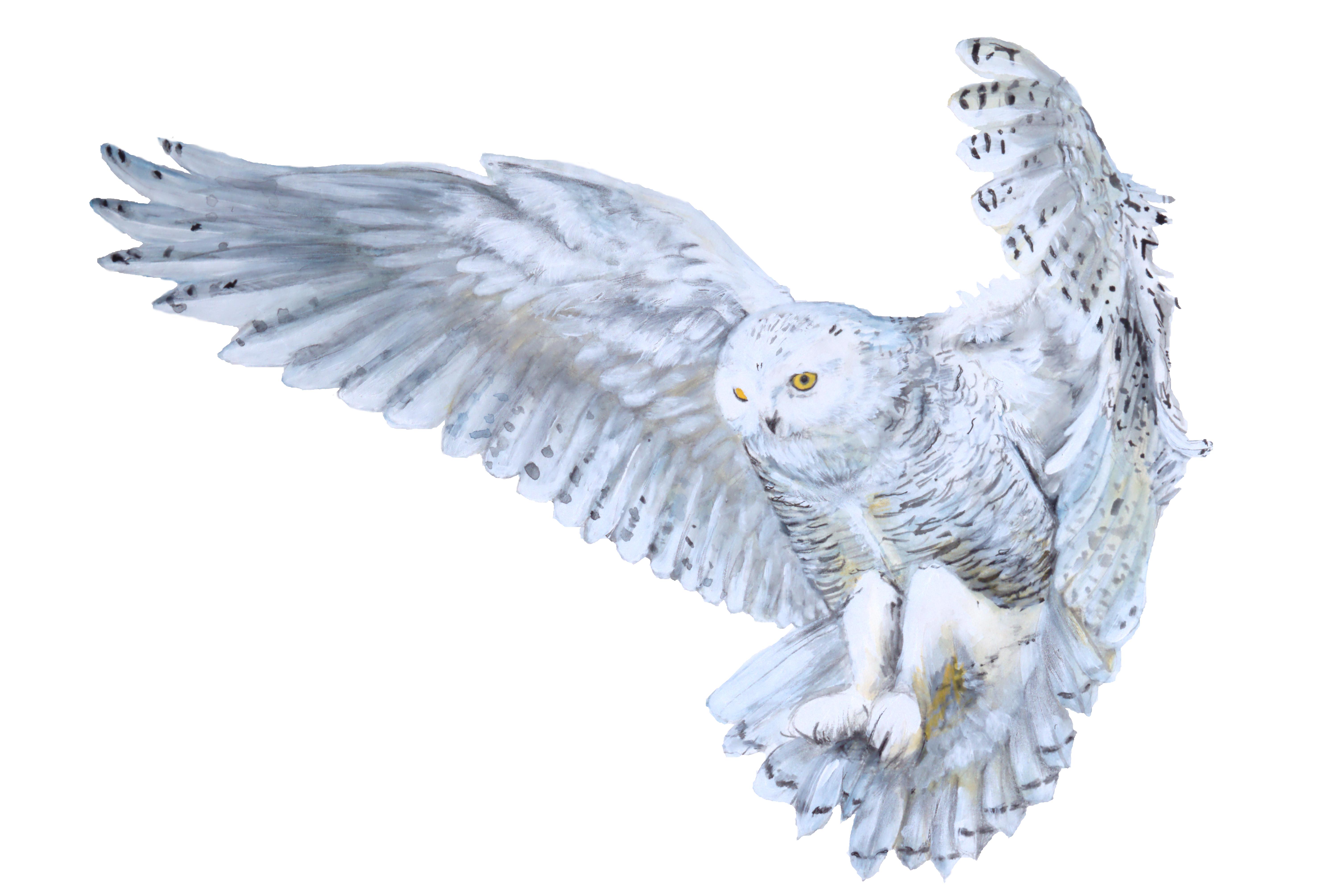 6016x4016 Original Watercolor Snowy Owl