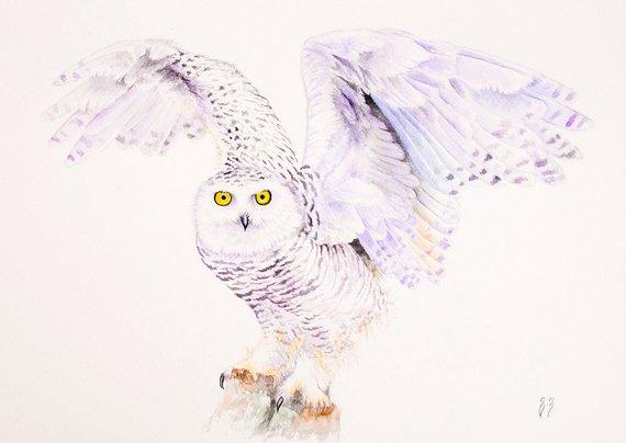 570x404 Owl Watercolor Painting Snowy Owl Wall Art Bird Watercolor Etsy