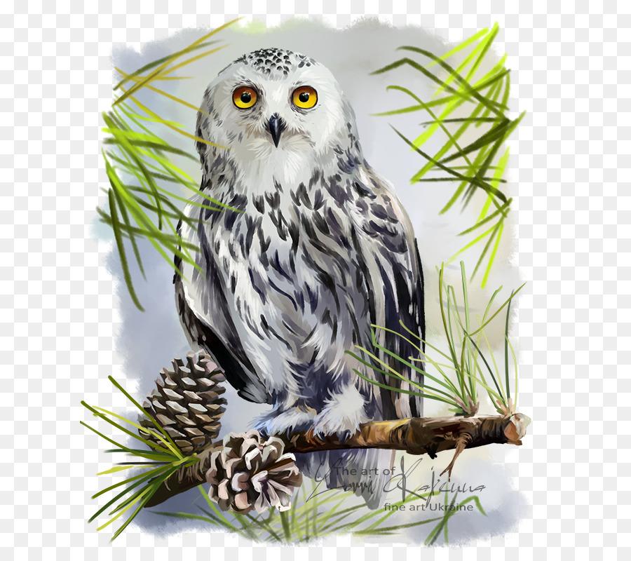 900x800 Snowy Owl Bird Great Horned Owl Drawing