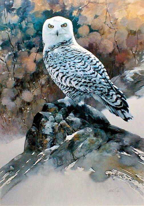 505x720 Watercolor Snowy Owl. Watercolor Snowy Owl, Owl