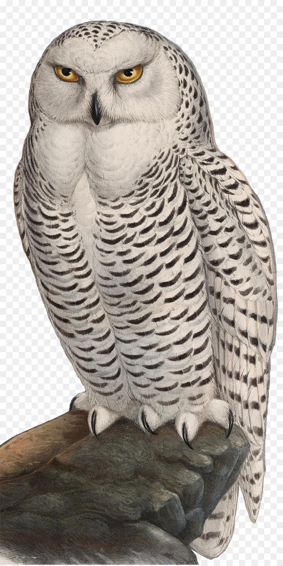 900x1800 Great Grey Owl Bird Snowy Owl Watercolor Painting