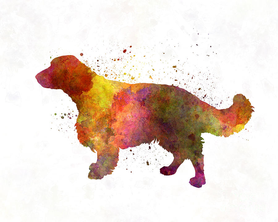 900x720 Welsh Springer Spaniel In Watercolor Painting By Pablo Romero