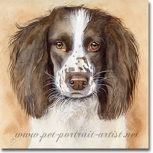 515x515 Dog Portraits Gt Springer Spaniels Gt Chips Gt Dog Portrait In