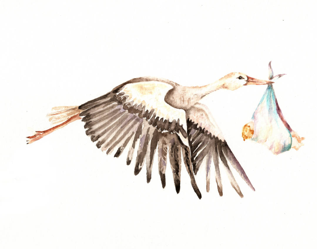 1079x849 Baby On Bird White Stork Carrying A Newborn Baby Vintage Etsy
