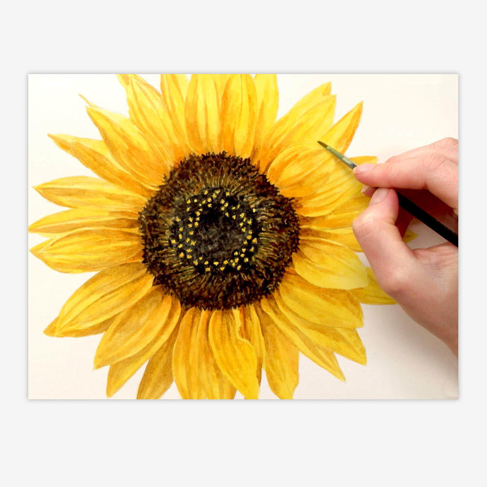 1000x1000 How To Paint A Realistic Sunflower In Watercolour