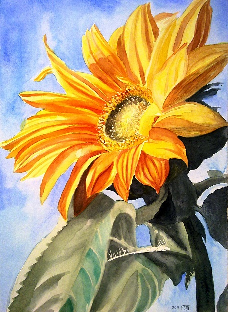 457x625 A Sunflower Watercolor Painting Zeinab1361art