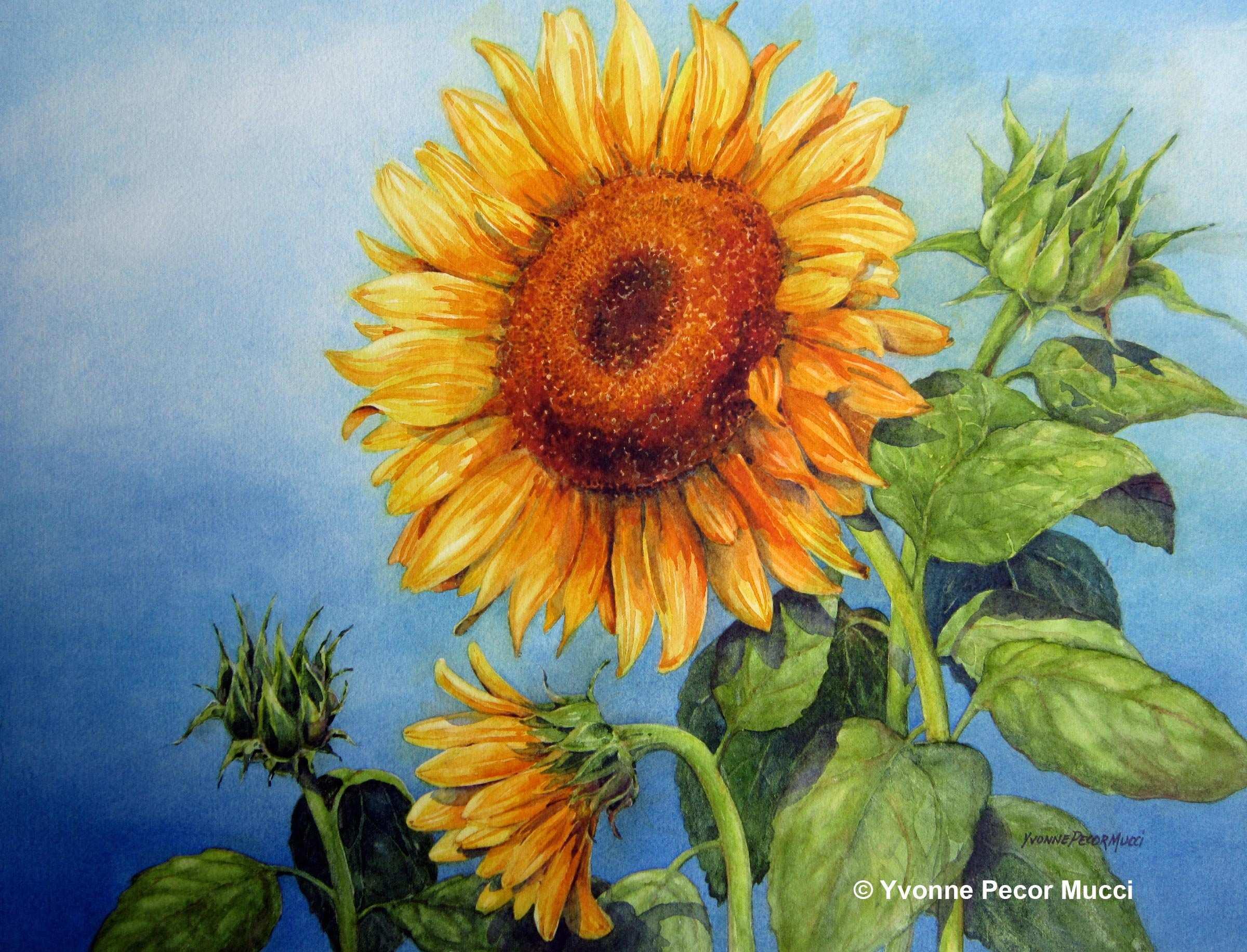 2400x1833 Sunflower Painting Elegant Sunflowers Watercolor Painting Ideas