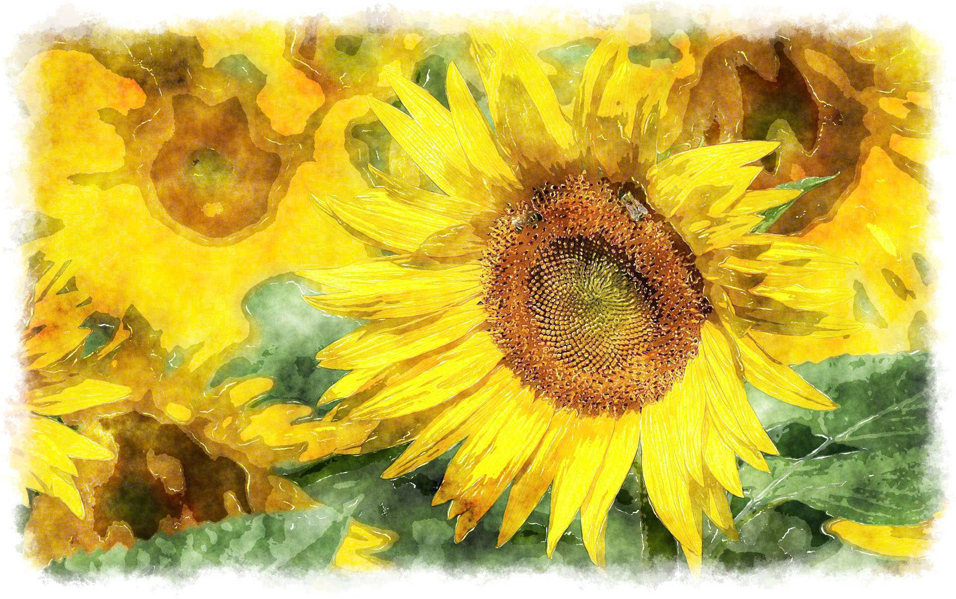 1920x1203 Sunflower Painting Fresh Watercolor Sunflower Painting Ideas