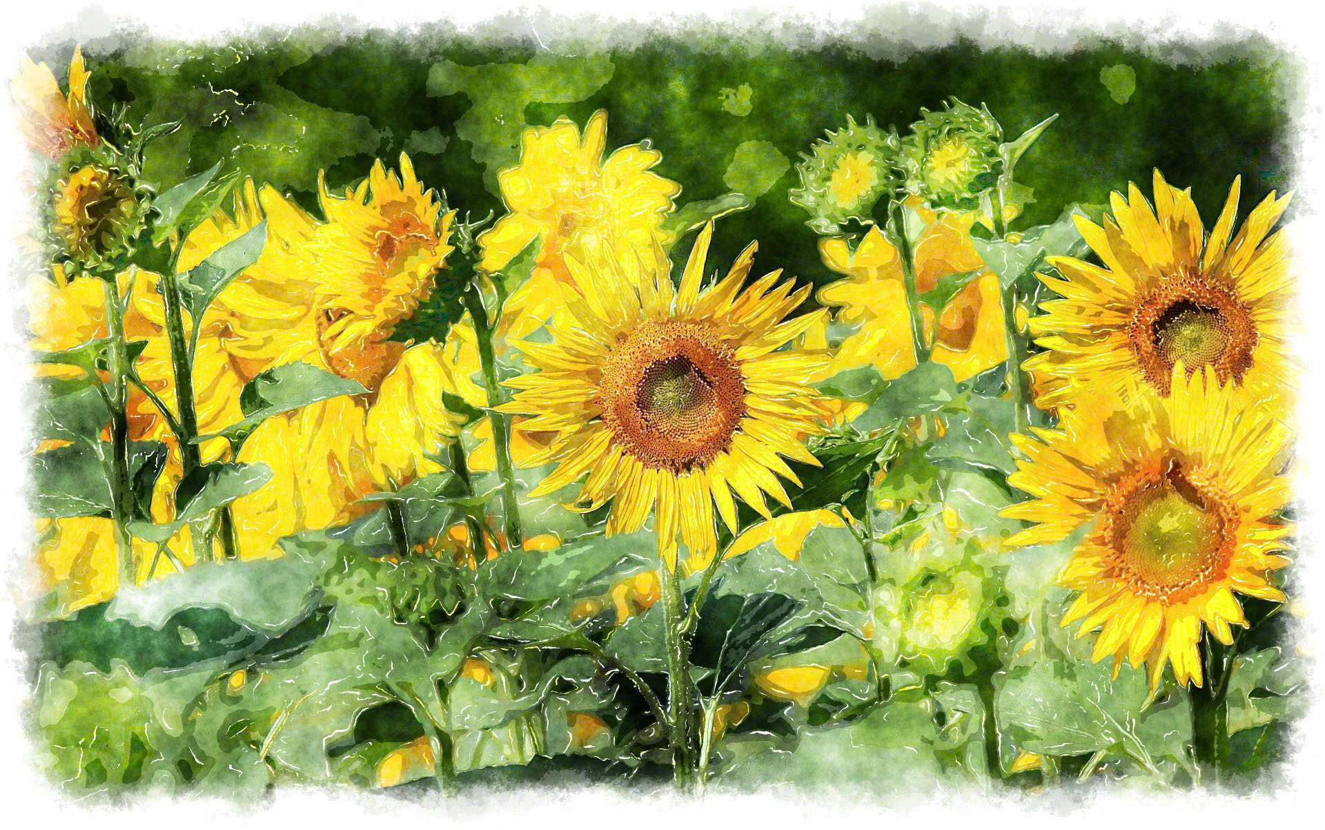 1920x1202 Sunflower Painting Lovely Watercolor Sunflower Painting Painting