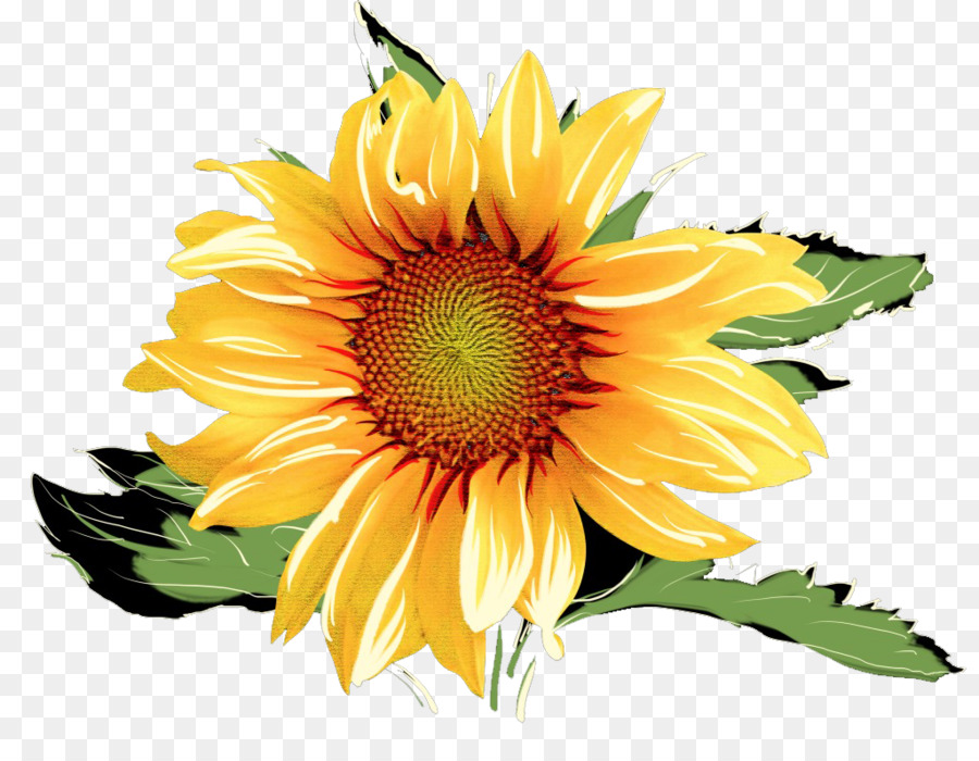 900x700 Common Sunflower Watercolor Painting