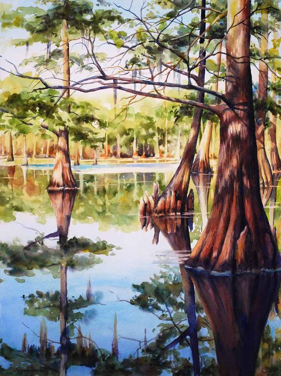 570x764 Cypress Trees In Louisiana Swamp Lake Watercolor Art Print Etsy