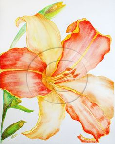 Tiger Lily Watercolor