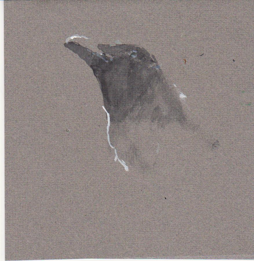 877x900 Crow Study Robert Pollien, Artist Maine, Wyoming, Landscape, Crows.