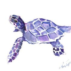 236x236 20 Best Painting Turtles Images Sea Turtle Art, Sea
