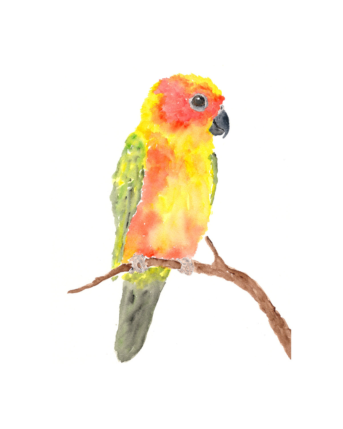 1200x1500 Watercolor Paintings Of Parrots Watercolor Paintings Of Parrots