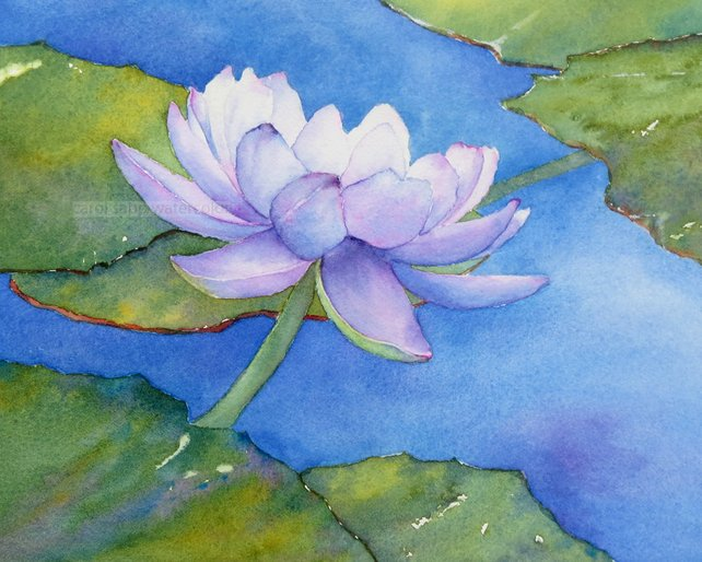 642x514 Water Lily Painting Water Lily Watercolor Lily Pond Purple Etsy