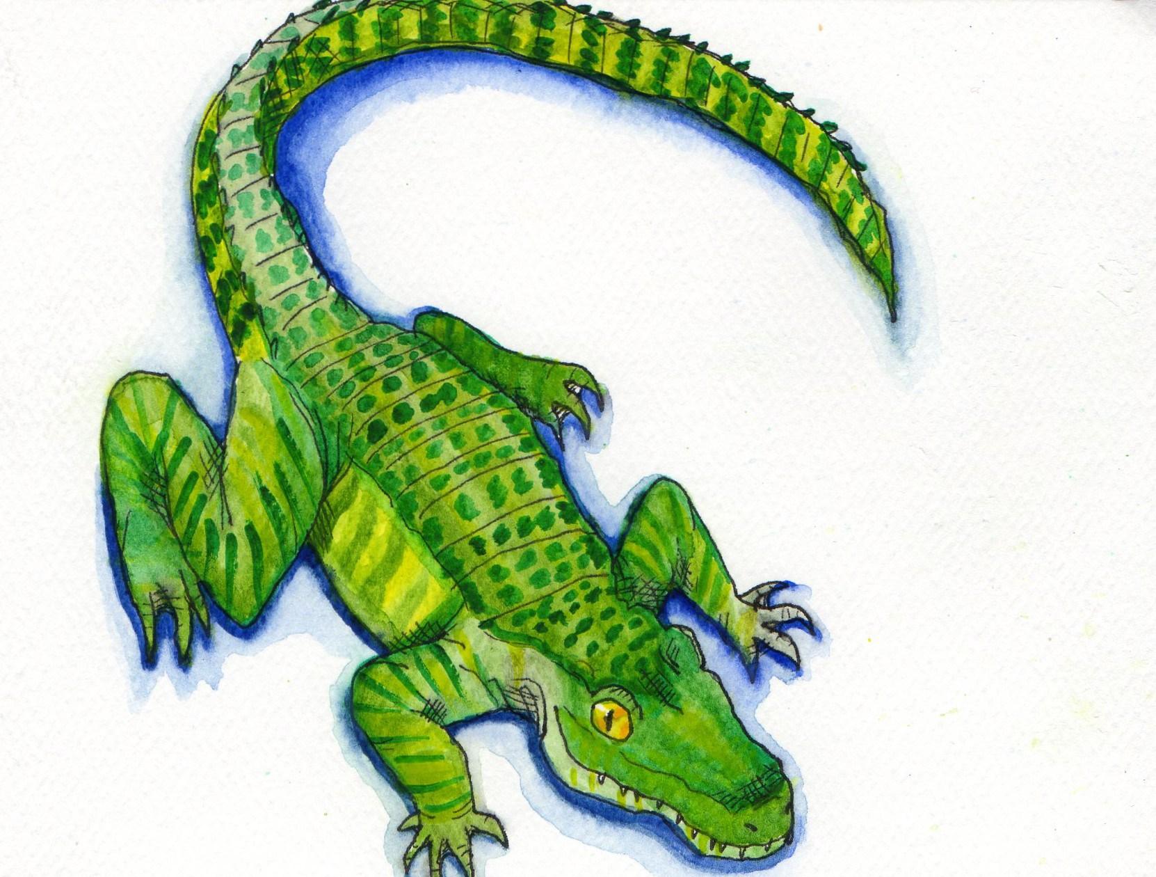 1662x1260 Alligator In Watercolor Alex Bond