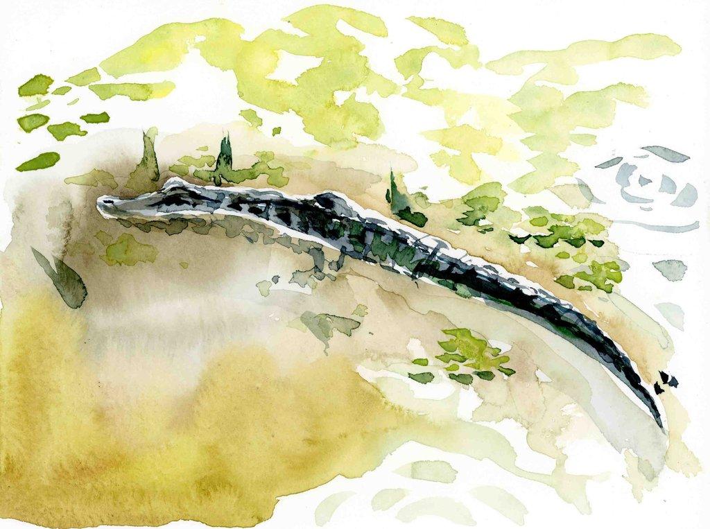 1024x763 Alligator Watercolor Print Lyla Clayre Studio