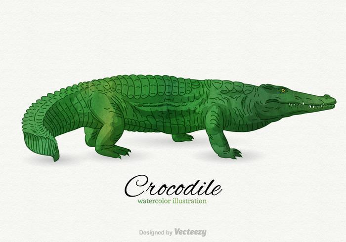 700x490 Crocodile Vector Illustration