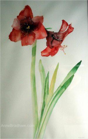 300x470 Original Watercolor Paintings Anne Bradham Original Watercolors
