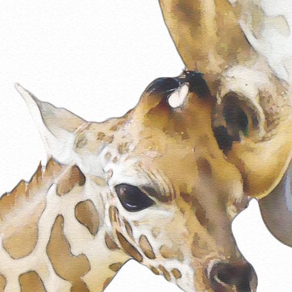 570x570 Giraffe Family Print, Animal Print Nursery Wall Decor, Wall Art