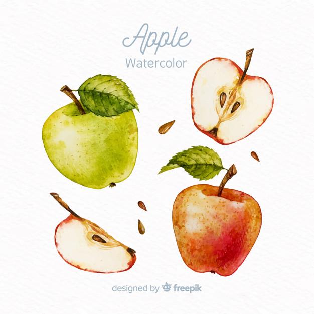 626x626 Watercolor Apple Set Vector Free Download