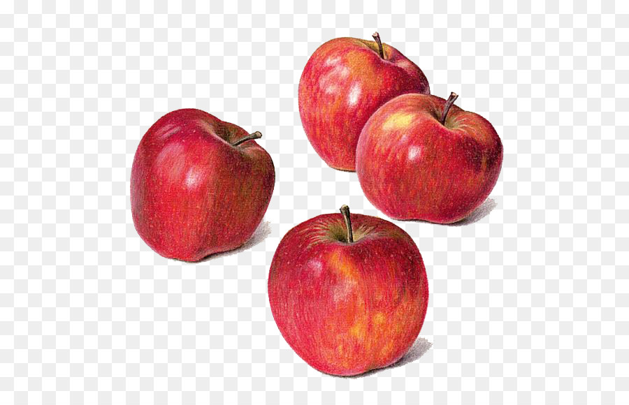 900x580 Drawing Apple Watercolor Painting Still Life